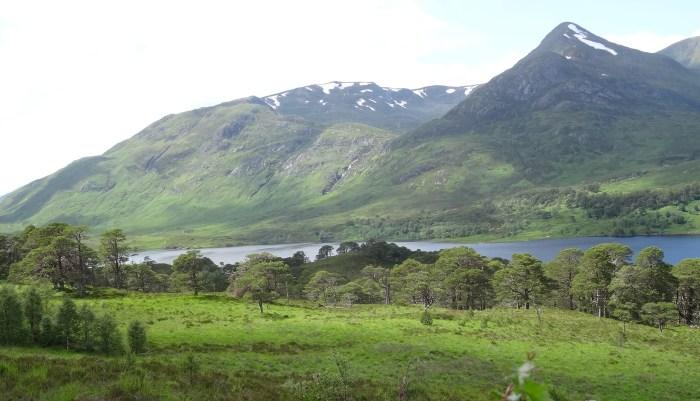 Another valley journey: Glen Affric, Scottish Highlands