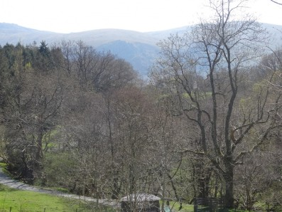 Trees in North Wales are waiting for spring