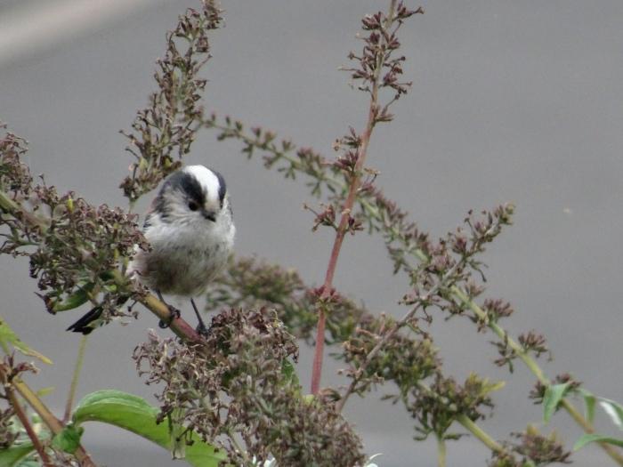 GardenBirds.UnknownVisitor.September2014