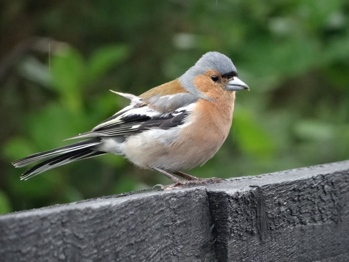 GreatGlenWay-Mile7-Bird.7_7_15
